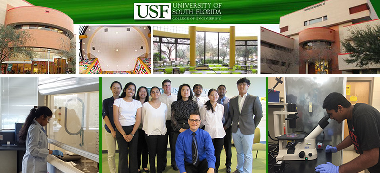Image for King HS students gain real-world STEM research opportunities through USF
